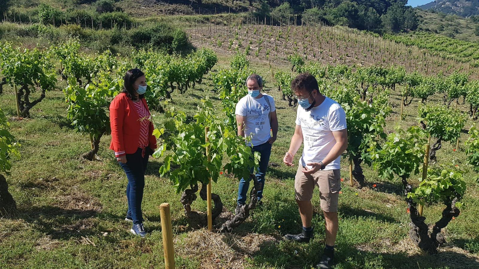 Carmen Urbano, directora general de Promoción e Innovación Agroalimentaria de Gobierno de Aragón visita el proyecto del Master of Wine aragonés Fernando Mora