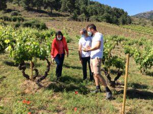 Viñas viejas de garnacha. Aragón conjunto de tierras, personas y tradición