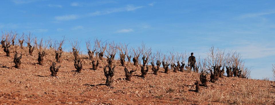 Norrel Robertson recorre sus viñas
