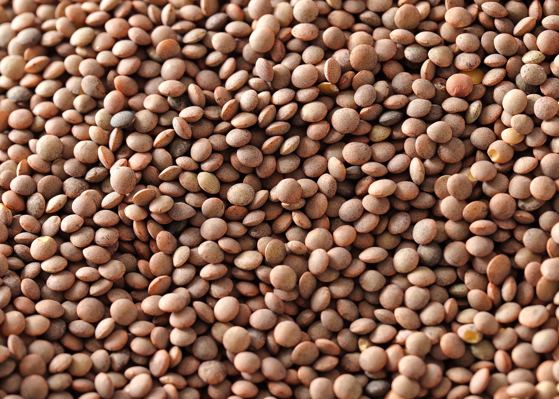 lentejas-ecológicas-aragón-alimentos-nobles
