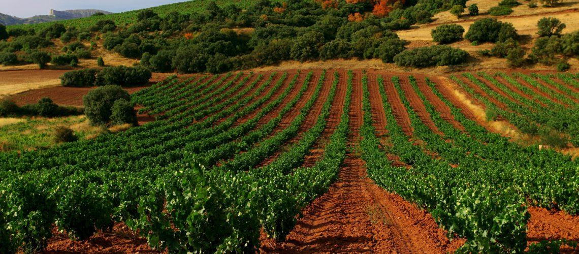Aragón variedades vinificación