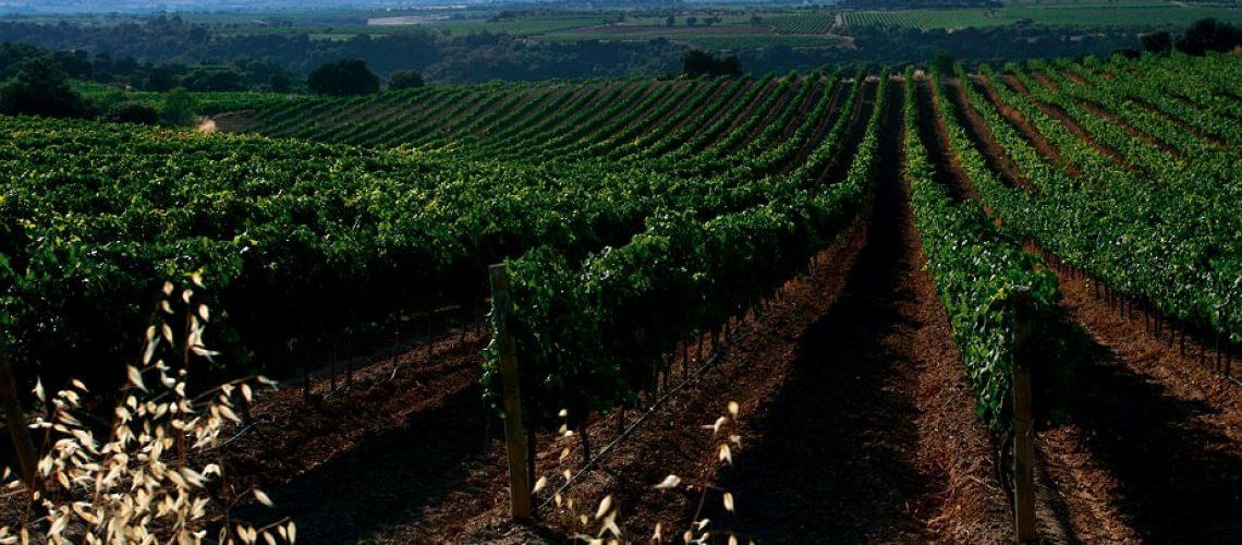 Resolución sector vino